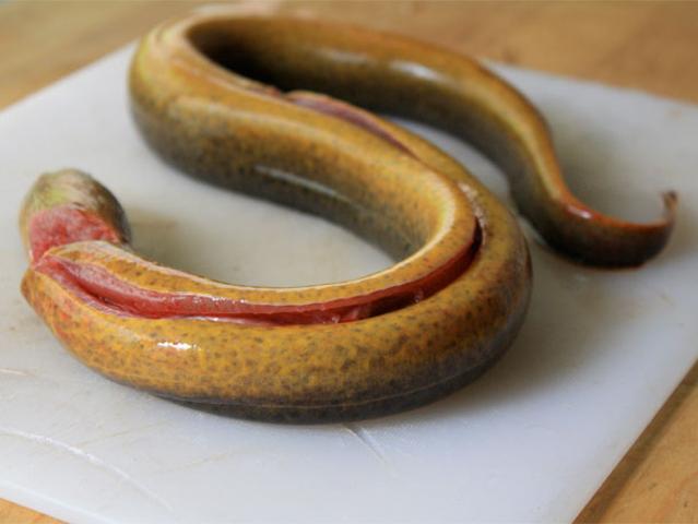 Roast Stuffed Eel Recipe